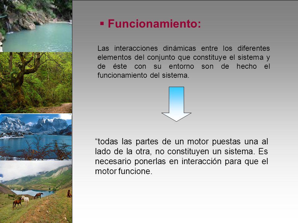 Funcionamiento: Las interacciones dinámicas entre los diferentes elementos del conjunto que constituye el sistema y de éste con su entorno son de hecho el funcionamiento del sistema.