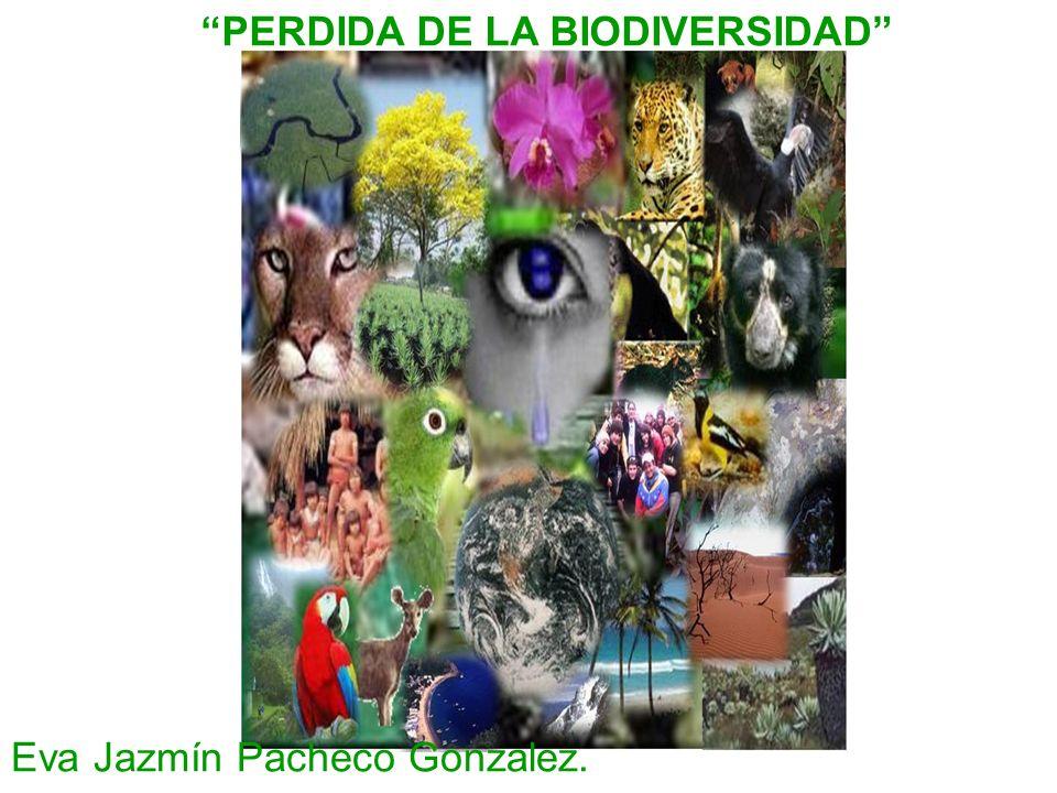 PERDIDA DE LA BIODIVERSIDAD Eva Jazmín Pacheco Gonzalez.