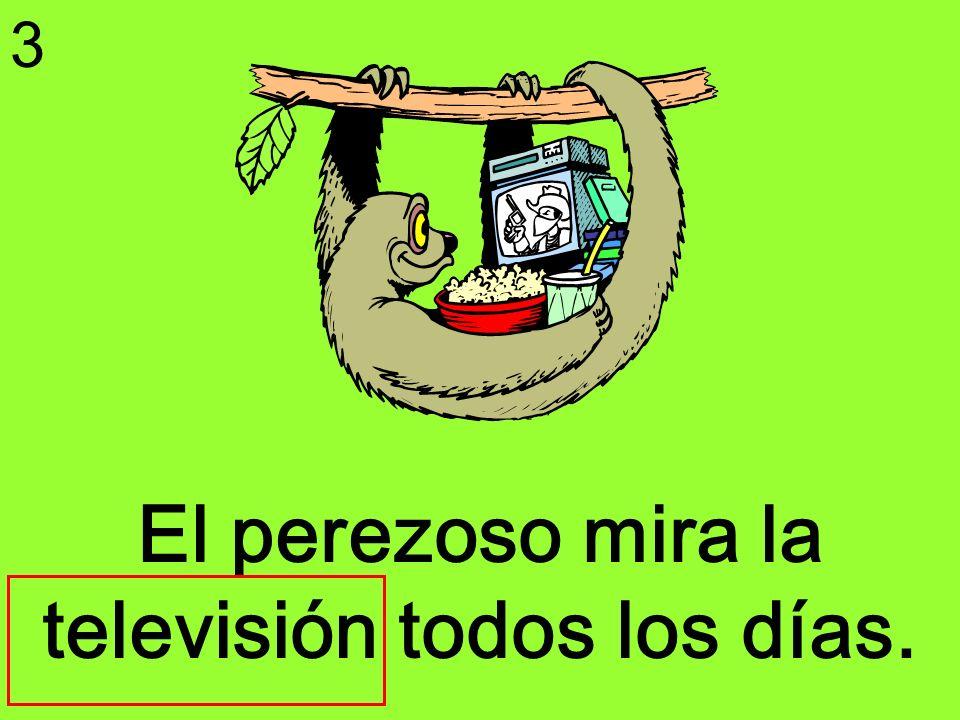 El perezoso mira la televisión todos los días. 3