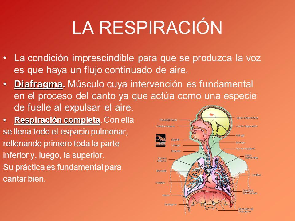 LA RESPIRACIÓN La condición imprescindible para que se produzca la voz es que haya un flujo continuado de aire. Diafragma.Diafragma. Músculo cuya inte