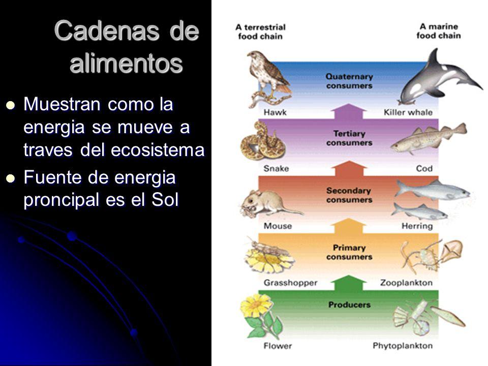 Cadenas de alimentos Muestran como la energia se mueve a traves del ecosistema Muestran como la energia se mueve a traves del ecosistema Fuente de ene