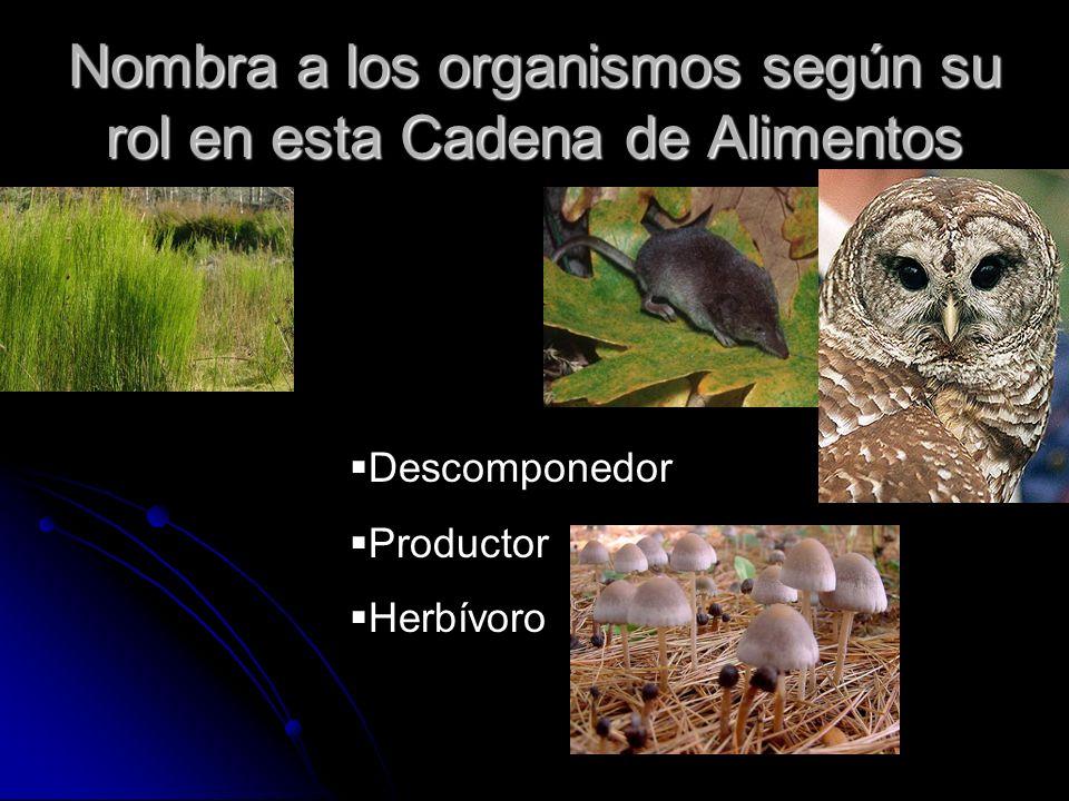 Nombra a los organismos según su rol en esta Cadena de Alimentos Descomponedor Productor Herbívoro