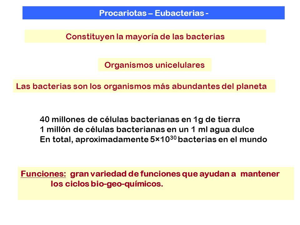 Procariotas – Eubacterias - Organismos unicelulares Funciones: gran variedad de funciones que ayudan a mantener los ciclos bio-geo-químicos. Constituy