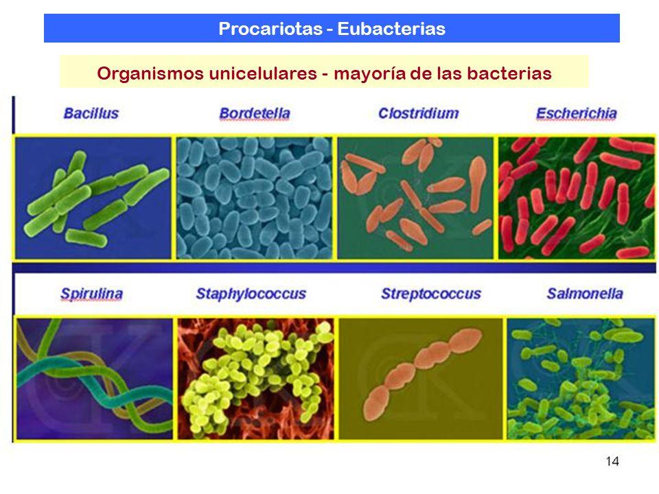Procariotas - Eubacterias Organismos unicelulares - mayoría de las bacterias