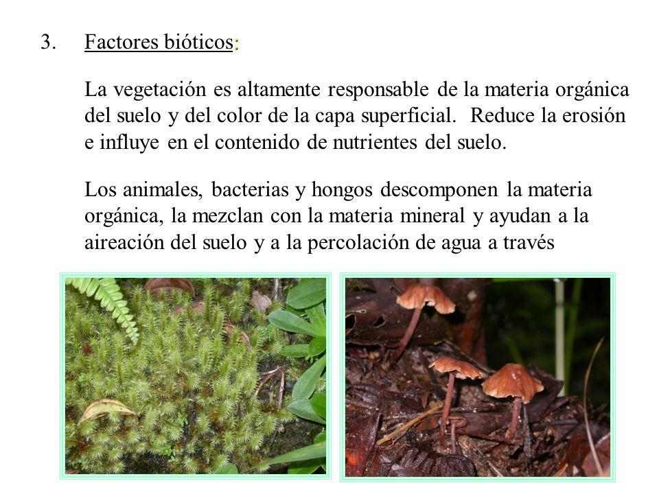 : 3.Factores bióticos: La vegetación es altamente responsable de la materia orgánica del suelo y del color de la capa superficial. Reduce la erosión e