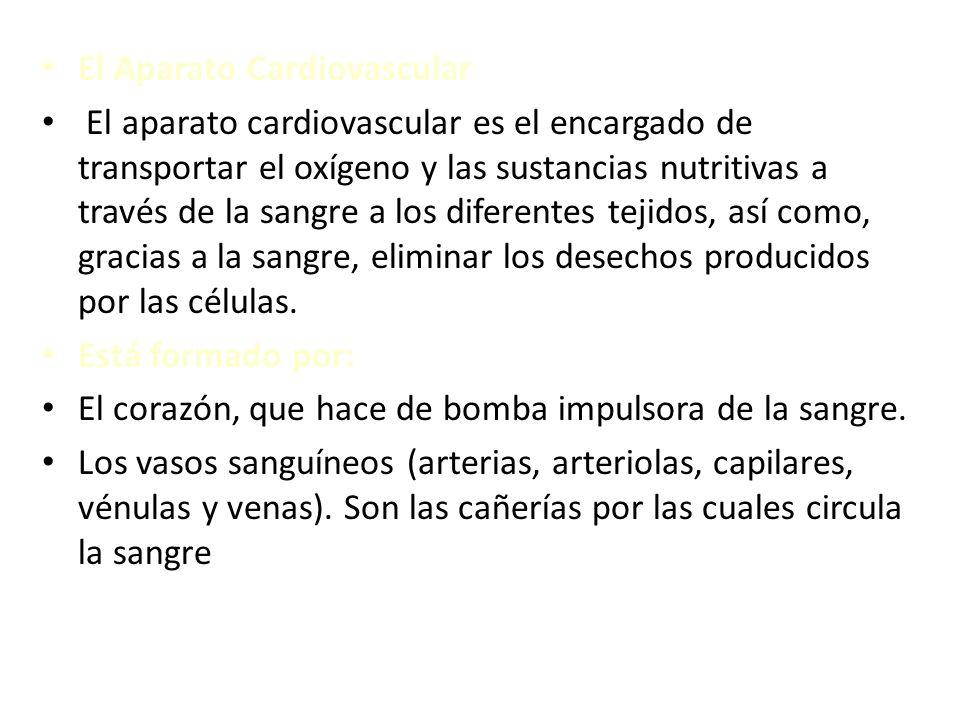 El Aparato Cardiovascular El aparato cardiovascular es el encargado de transportar el oxígeno y las sustancias nutritivas a través de la sangre a los