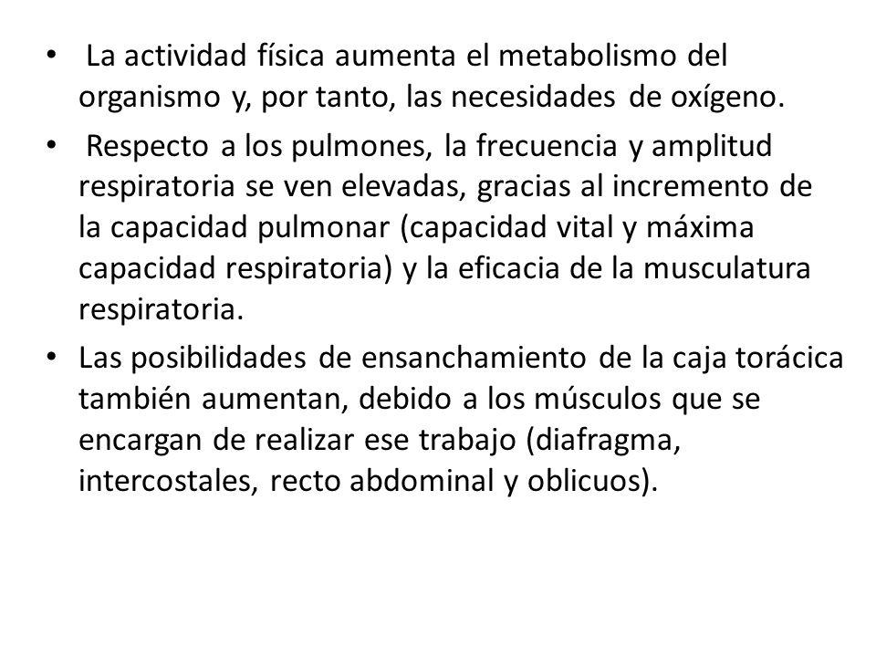 La actividad física aumenta el metabolismo del organismo y, por tanto, las necesidades de oxígeno. Respecto a los pulmones, la frecuencia y amplitud r