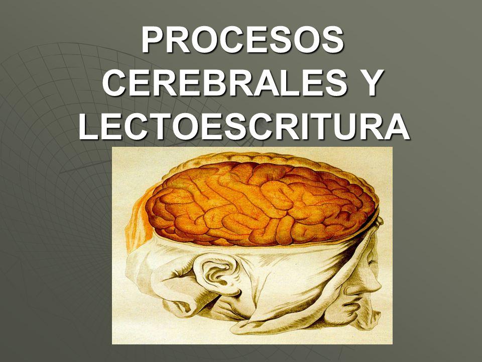 PROCESOS CEREBRALES Y LECTOESCRITURA