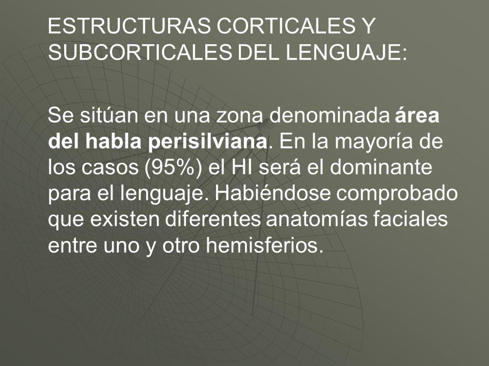 ESTRUCTURAS CORTICALES Y SUBCORTICALES DEL LENGUAJE: Se sitúan en una zona denominada área del habla perisilviana. En la mayoría de los casos (95%) el