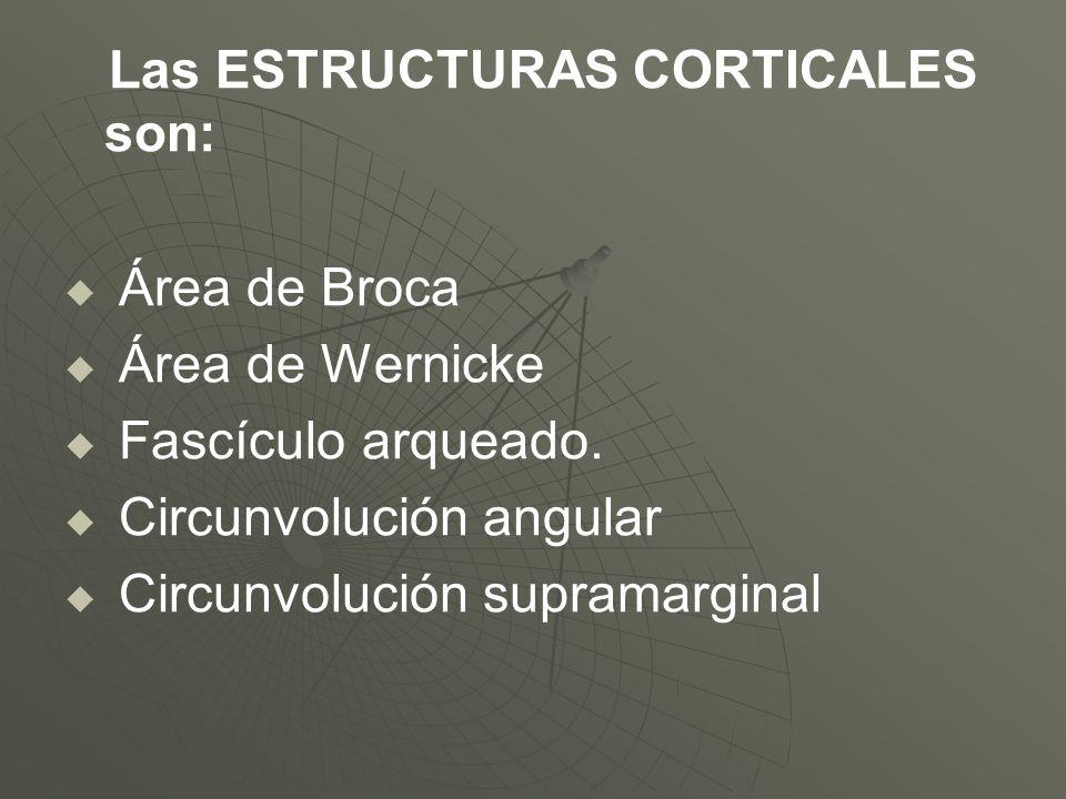 Las ESTRUCTURAS CORTICALES son: Área de Broca Área de Wernicke Fascículo arqueado. Circunvolución angular Circunvolución supramarginal