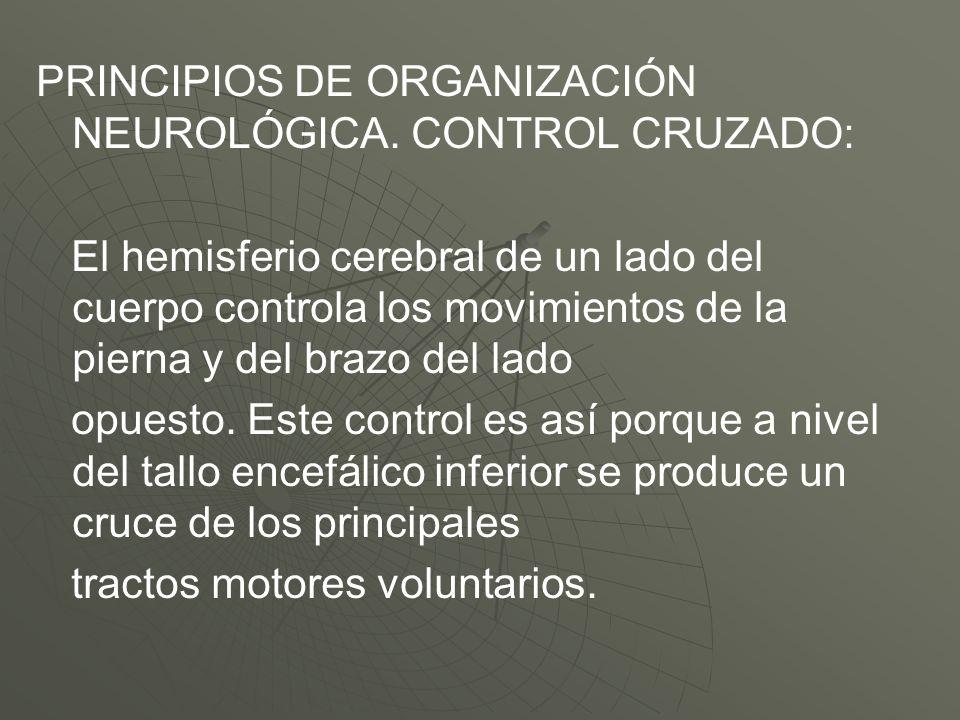 PRINCIPIOS DE ORGANIZACIÓN NEUROLÓGICA. CONTROL CRUZADO: El hemisferio cerebral de un lado del cuerpo controla los movimientos de la pierna y del braz