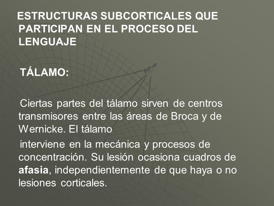 ESTRUCTURAS SUBCORTICALES QUE PARTICIPAN EN EL PROCESO DEL LENGUAJE TÁLAMO: Ciertas partes del tálamo sirven de centros transmisores entre las áreas d