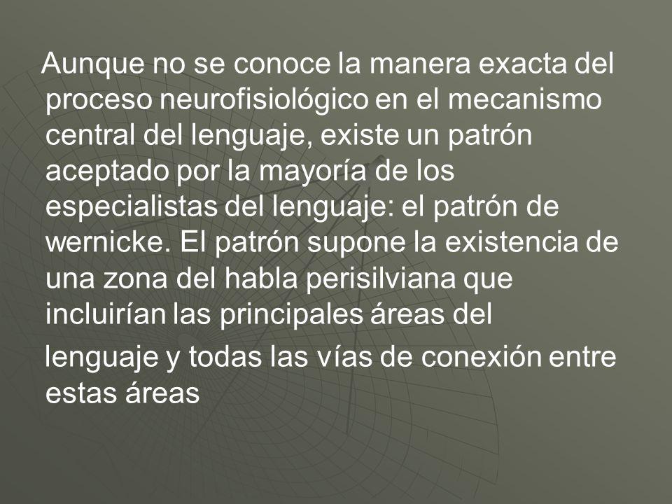 Aunque no se conoce la manera exacta del proceso neurofisiológico en el mecanismo central del lenguaje, existe un patrón aceptado por la mayoría de lo