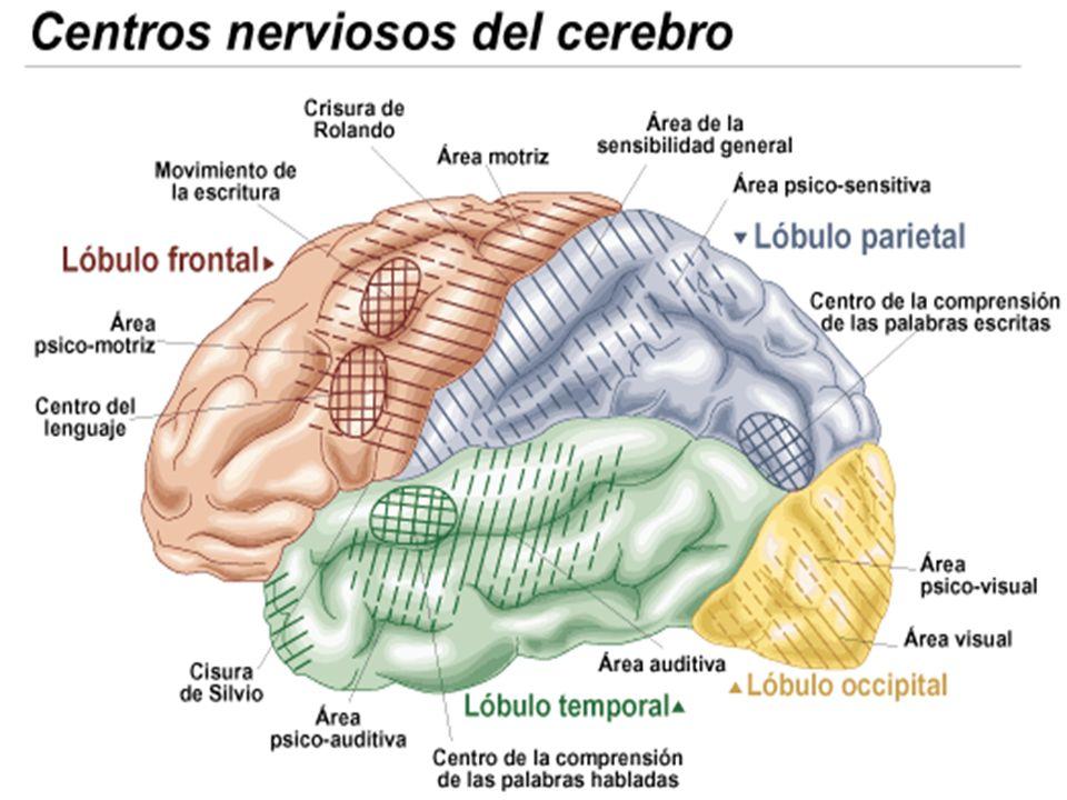 Alexia frontal: Descrita por Benson.Se produce en la patología del lóbulo frontal o Área de Broca.