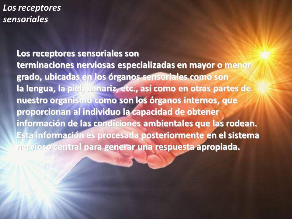 Los receptores sensoriales Los receptores sensoriales son terminaciones nerviosas especializadas en mayor o menor grado, ubicadas en los órganos senso
