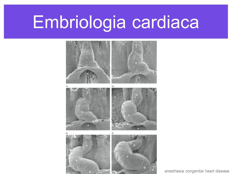 Embriología Cardiaca Corazón Incipiente tiene 2 capas Endocardio (interna) Miocardio (externa) El Epicardio migración de células extracardiacas del órgano proepicárdico y forma vasos coronarios dia 25 se contrae el corazón junto con las venas umbilicovitelinas y Aorta dorsal en desarrollo