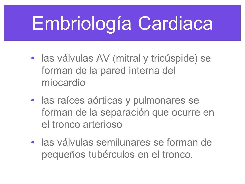 Embriología Cardiaca se forman 6 pares de arcos en la semana 4 serán el sistema adulto arterial: 1 y 2 desaparecen A.