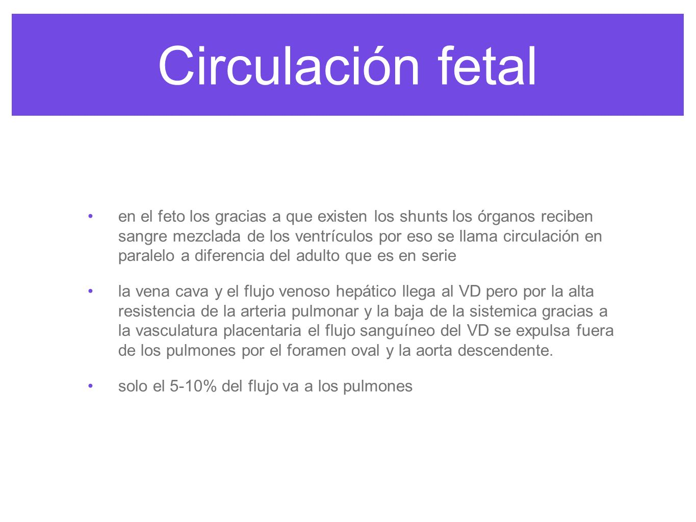 Circulación fetal anestesia pediatrica de Smith