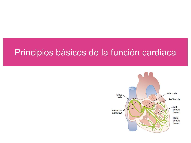 Determinantes de la función cardiaca Manual CTO de medicina y cirugía 7ma edición.