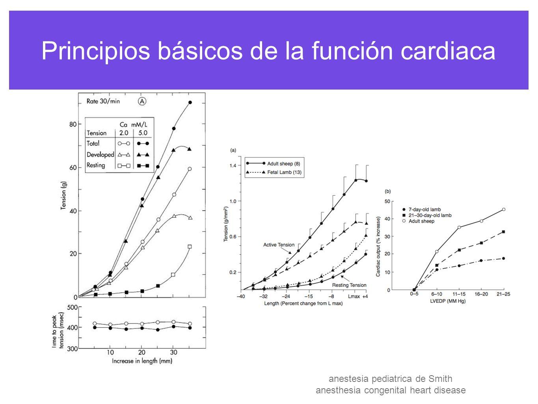 Principios básicos de la función cardiaca la precarga es el estrés diastólico de la pared que resulta de la entrada de cierto volumen de sangre al distender el ventrículo es la carga presente antes de que una contracción empieze o al final de la diástole es el reflejo de la P de llenado de la AI o el AD anestesia pediatrica de Smith