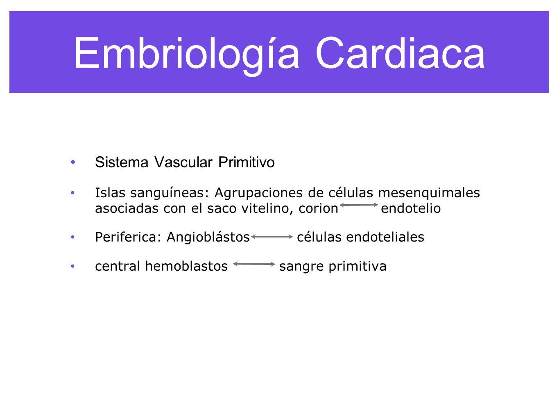 Embriología Cardiaca