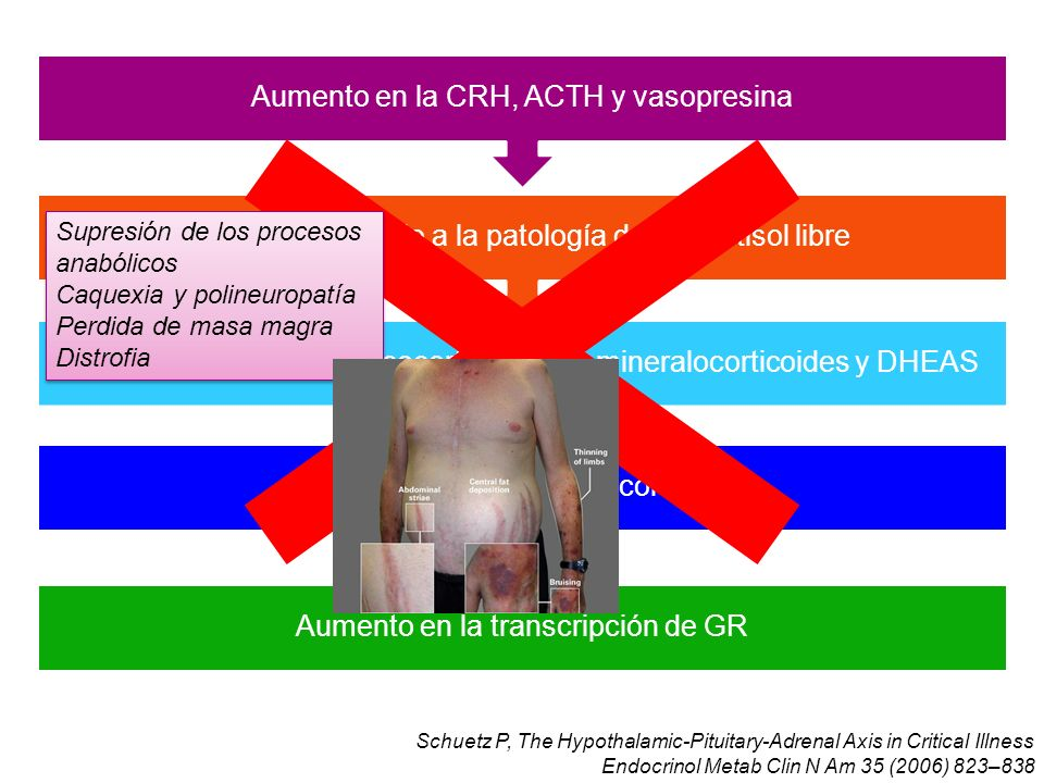 Schuetz P, The Hypothalamic-Pituitary-Adrenal Axis in Critical Illness Endocrinol Metab Clin N Am 35 (2006) 823–838 Aumento en la transcripción de GR