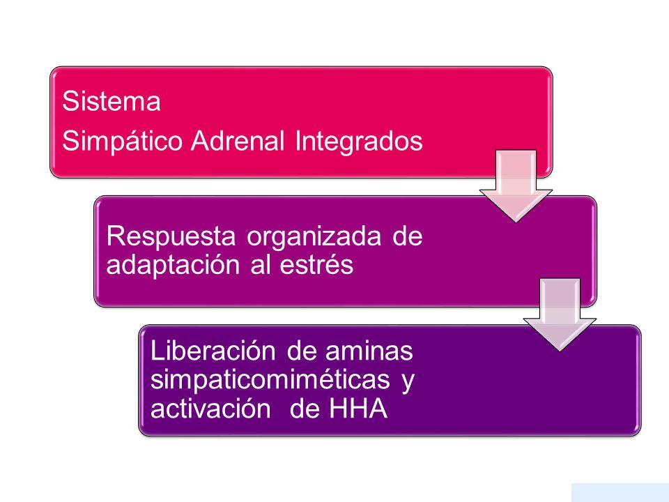 Sistema Simpático Adrenal Integrados Respuesta organizada de adaptación al estrés Liberación de aminas simpaticomiméticas y activación de HHA