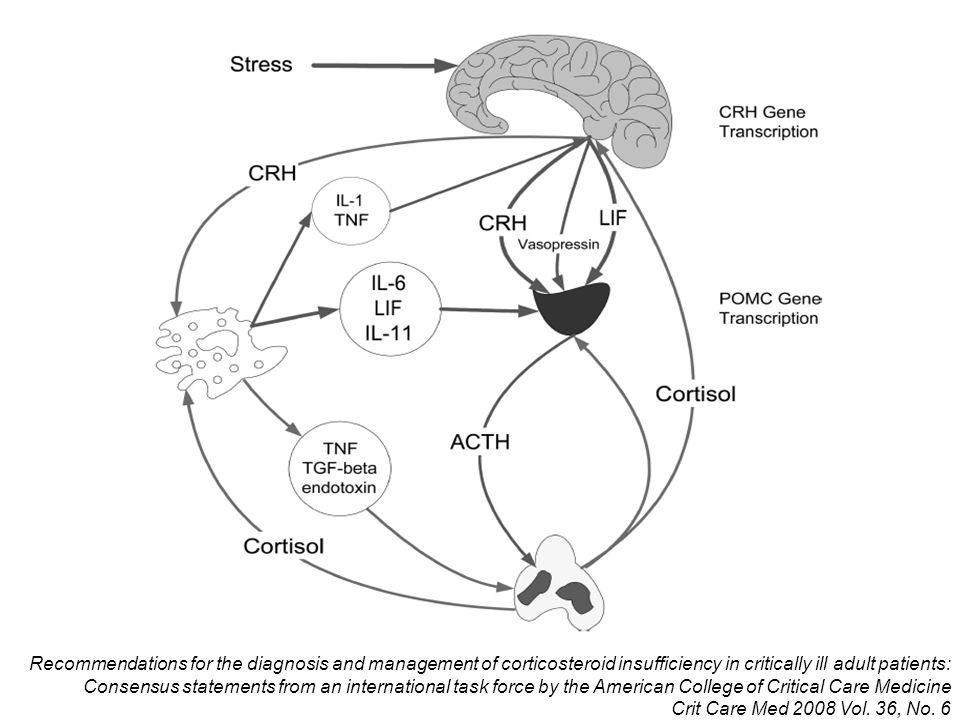 FISOLOGÍA Cortisol: Principal corticoesteroide endógeno Conversión de colesterol a pregnelonona Síntesis controlada por la ACTH >90% circula unido a CGB