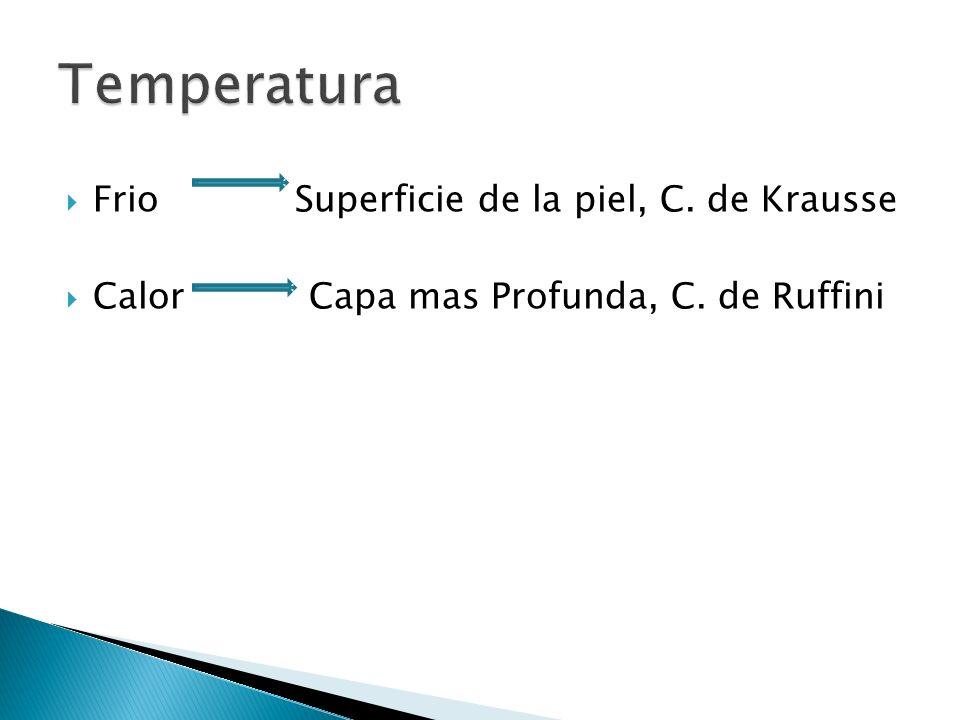 Frio Superficie de la piel, C. de Krausse Calor Capa mas Profunda, C. de Ruffini