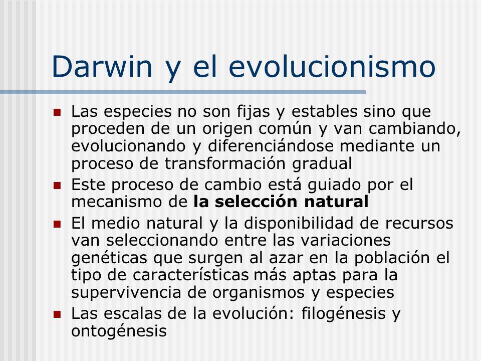 Darwin y el evolucionismo Las especies no son fijas y estables sino que proceden de un origen común y van cambiando, evolucionando y diferenciándose m