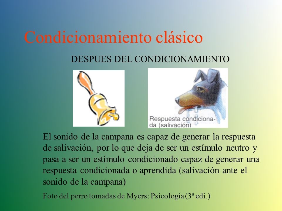Condicionamiento clásico DURANTE EL CONDICIONAMIENTO Inmediatamente antes de presentar el estímulo no condicionado (el alimento) el experimentador pre