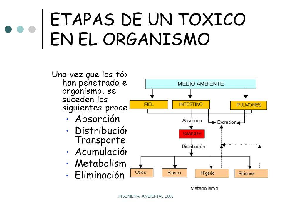 INGENIERIA AMBIENTAL 2006 ETAPAS DE UN TOXICO EN EL ORGANISMO Una vez que los tóxicos han penetrado en el organismo, se suceden los siguientes procesos: Absorción Distribución y Transporte Acumulación Metabolismo Eliminación