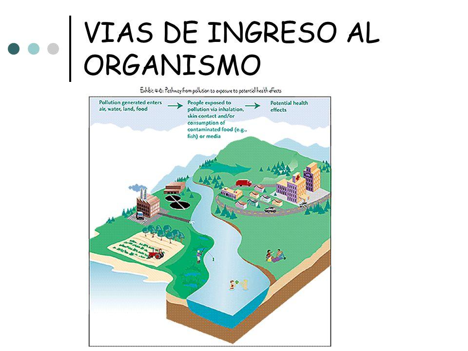 INGENIERIA AMBIENTAL 2006 VIAS DE INGRESO AL ORGANISMO Vía Oral Vía Dermal Vía Inhalatoria Vía Ocular Vía Parenteral