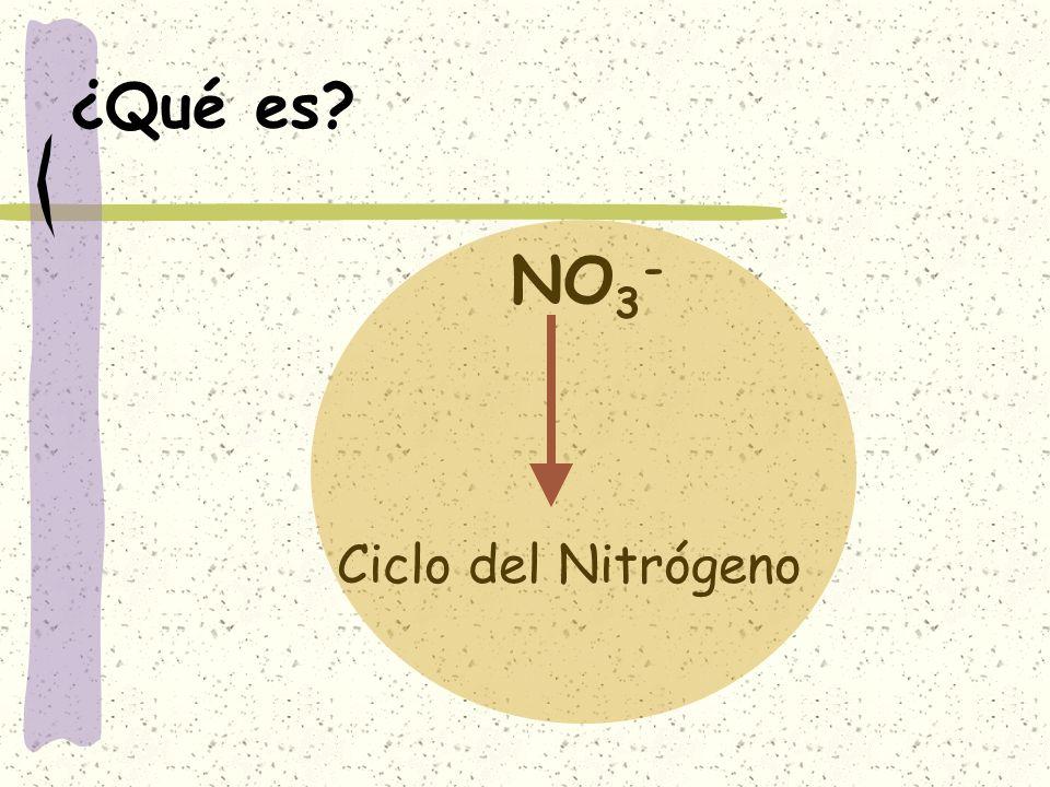 ¿Qué es? NO 3 - Ciclo del Nitrógeno