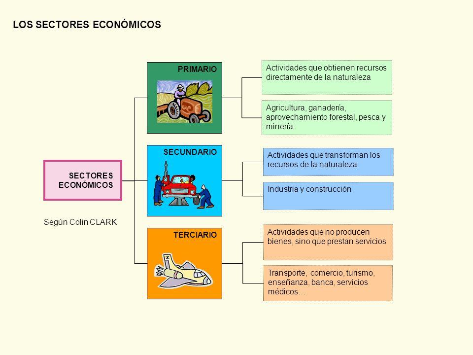LOS SECTORES ECONÓMICOS SECTORES ECONÓMICOS Actividades que obtienen recursos directamente de la naturaleza Agricultura, ganadería, aprovechamiento fo