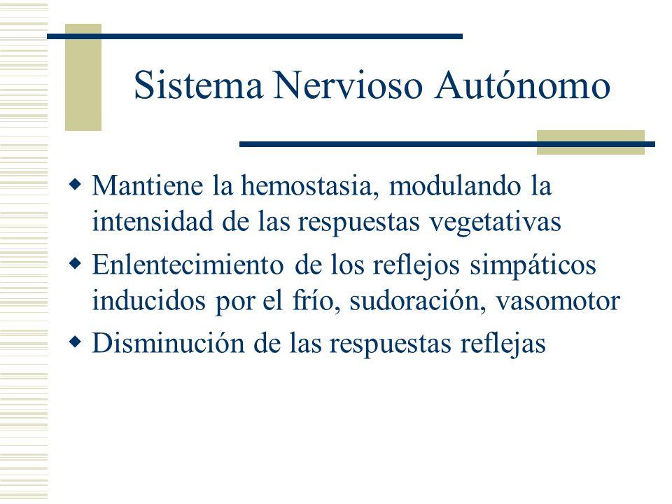 Sistema Nervioso Autónomo Mantiene la hemostasia, modulando la intensidad de las respuestas vegetativas Enlentecimiento de los reflejos simpáticos ind