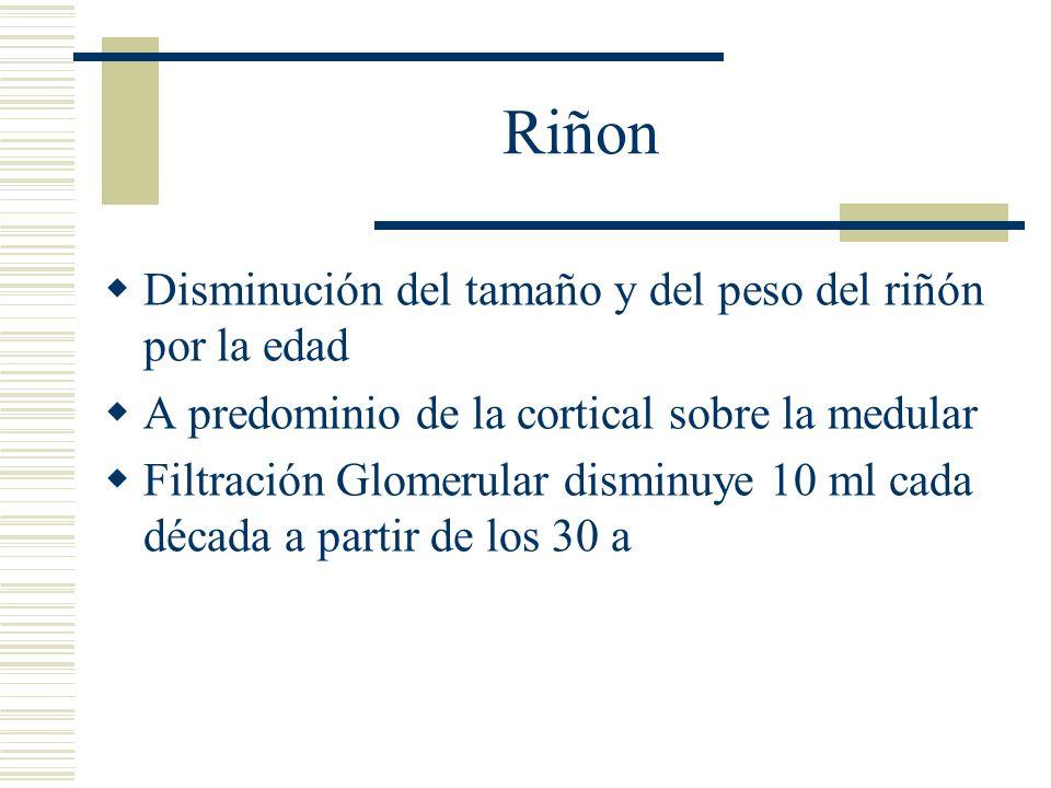 Riñon Disminución del tamaño y del peso del riñón por la edad A predominio de la cortical sobre la medular Filtración Glomerular disminuye 10 ml cada