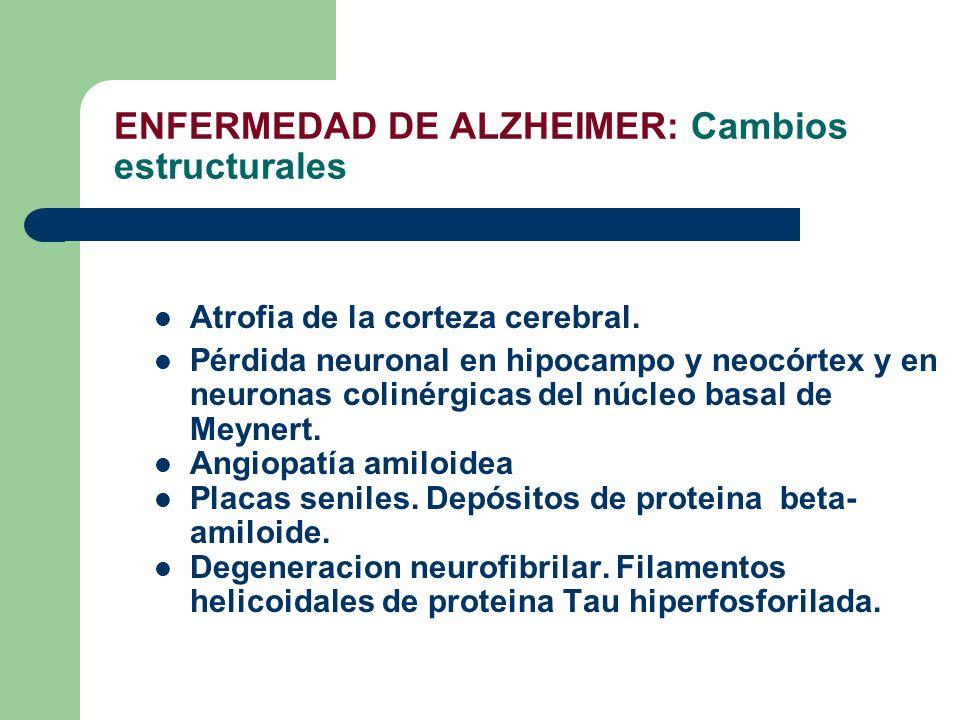 ENFERMEDAD DE ALZHEIMER: Cambios estructurales Atrofia de la corteza cerebral. Pérdida neuronal en hipocampo y neocórtex y en neuronas colinérgicas de
