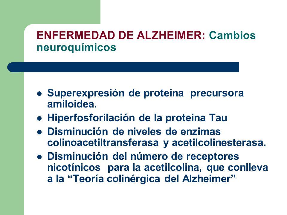 ENFERMEDAD DE ALZHEIMER: Cambios neuroquímicos Superexpresión de proteina precursora amiloidea. Hiperfosforilación de la proteina Tau Disminución de n