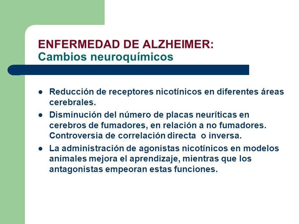 ENFERMEDAD DE ALZHEIMER: Cambios neuroquímicos Reducción de receptores nicotínicos en diferentes áreas cerebrales. Disminución del número de placas ne
