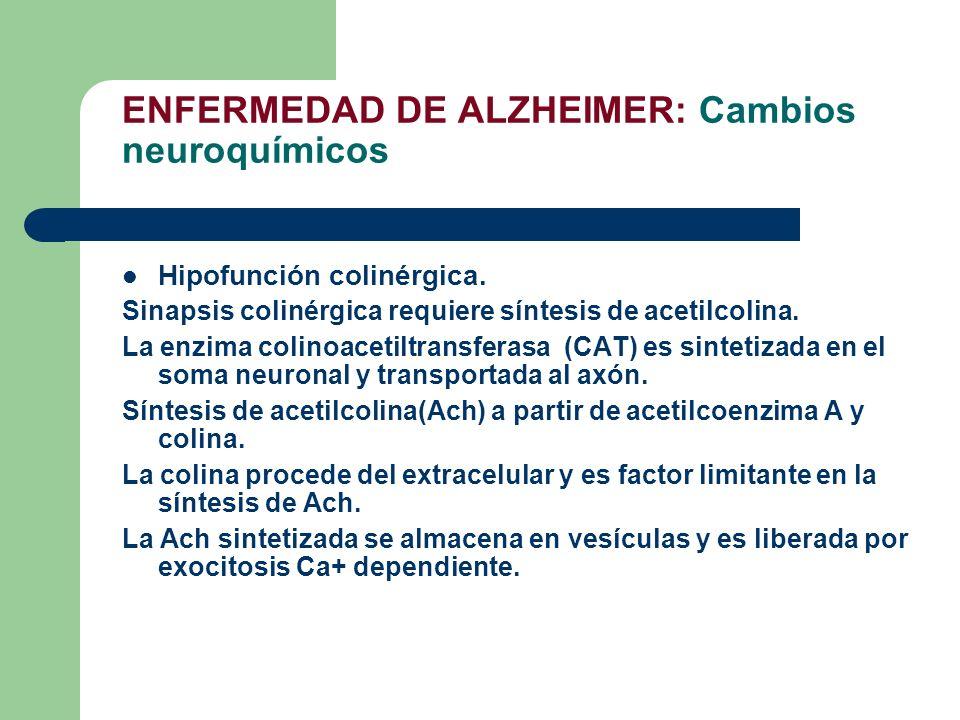 ENFERMEDAD DE ALZHEIMER: Cambios neuroquímicos Hipofunción colinérgica. Sinapsis colinérgica requiere síntesis de acetilcolina. La enzima colinoacetil
