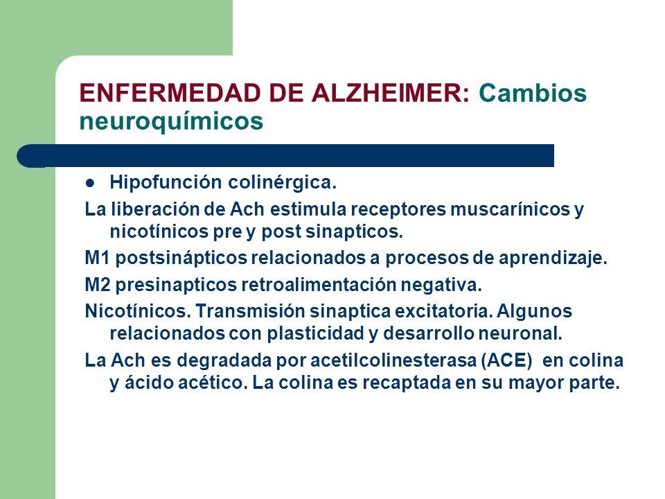 ENFERMEDAD DE ALZHEIMER: Cambios neuroquímicos Hipofunción colinérgica. La liberación de Ach estimula receptores muscarínicos y nicotínicos pre y post