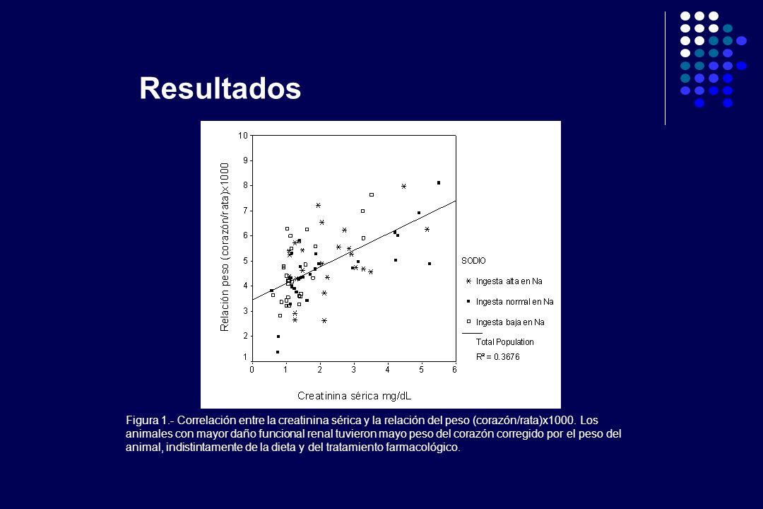 Figura 1.- Correlación entre la creatinina sérica y la relación del peso (corazón/rata)x1000. Los animales con mayor daño funcional renal tuvieron may