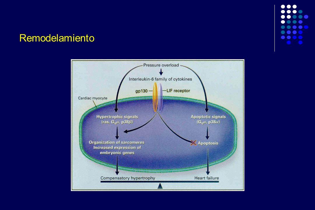 Figura 1.- Correlación entre la creatinina sérica y la relación del peso (corazón/rata)x1000.