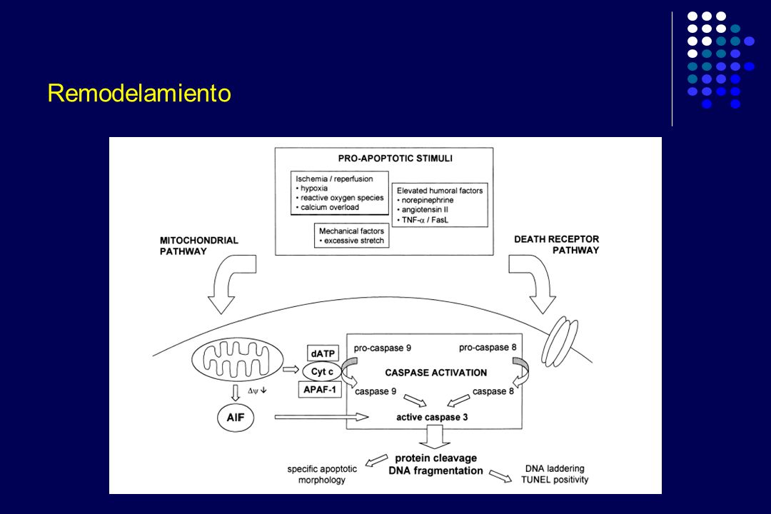 ADEMEX: Características basales Marcadores de Inflamación y expansión de volumen