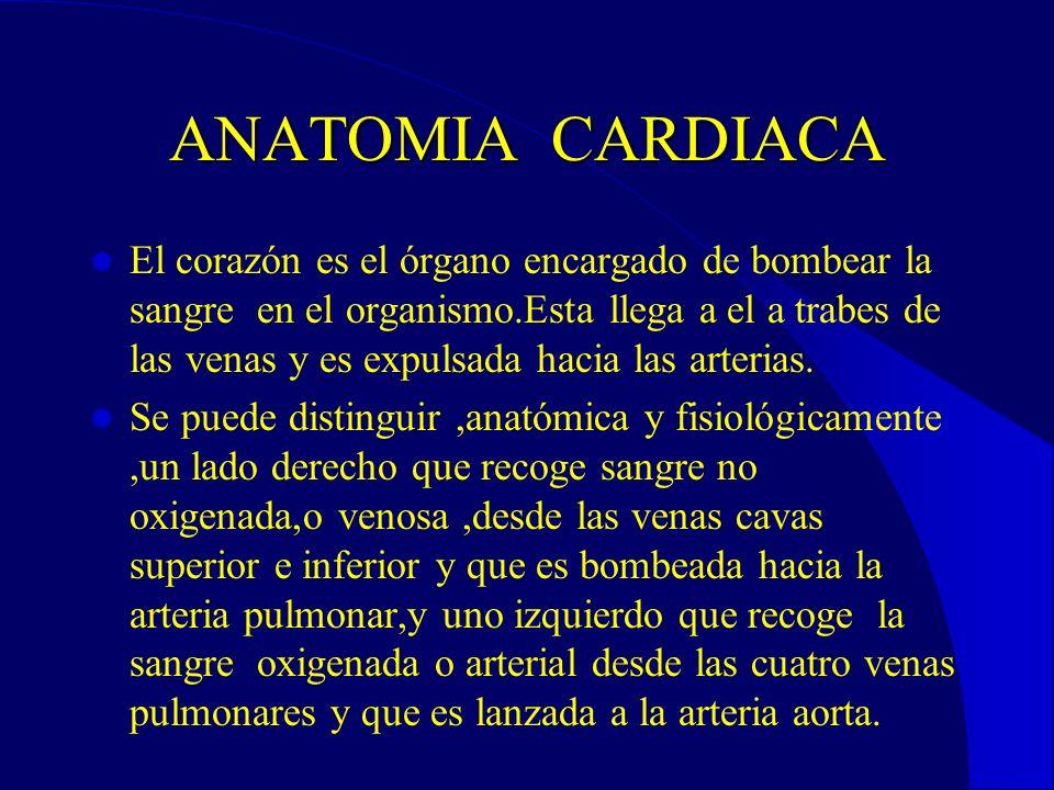 ANATOMIA CARDIACA El corazón es el órgano encargado de bombear la sangre en el organismo.Esta llega a el a trabes de las venas y es expulsada hacia las arterias.