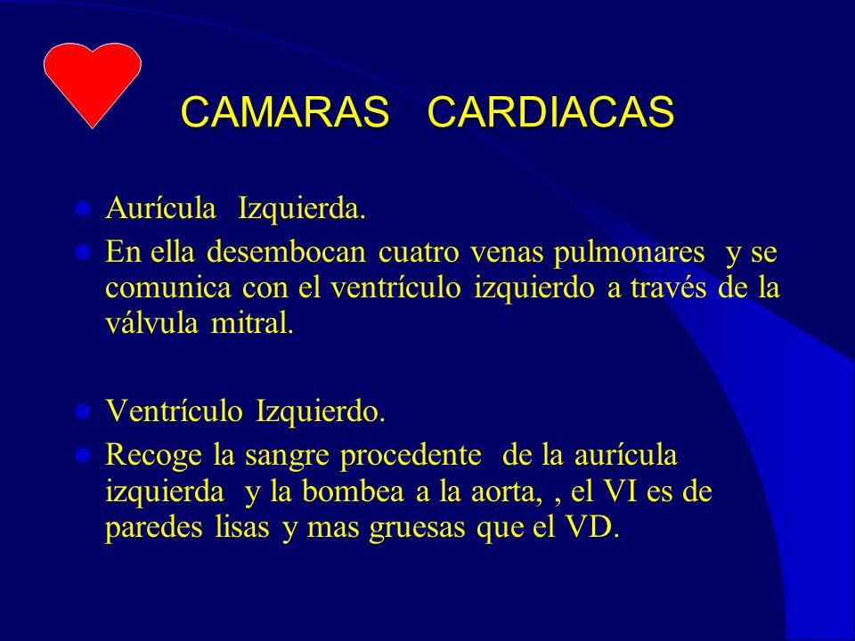 ANAMNESIS SQUATTING O ACUCLILLAMIENTO PALPITACIONES RETRASOS PONDO-ESTATURALES EDEMAS ACROPAQUIAS(dedos en palillo de tambor)