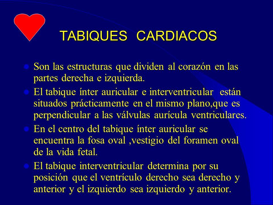 TABIQUES CARDIACOS TABIQUES CARDIACOS Son las estructuras que dividen al corazón en las partes derecha e izquierda.