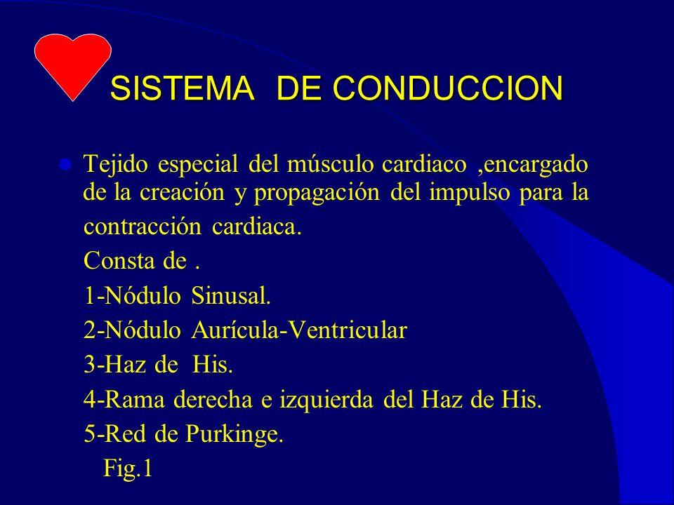 SISTEMA DE CONDUCCION Tejido especial del músculo cardiaco,encargado de la creación y propagación del impulso para la contracción cardiaca.