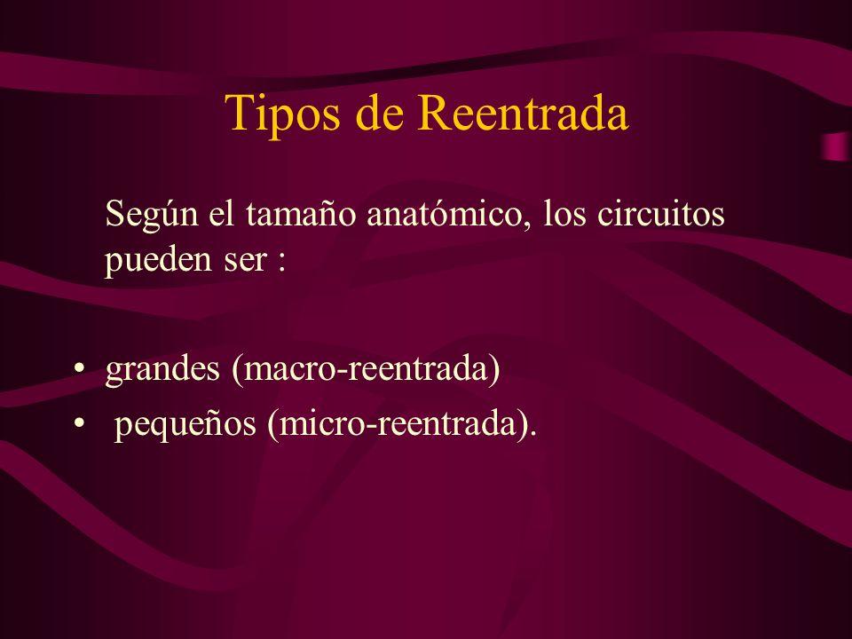 Tipos de Reentrada Según el tamaño anatómico, los circuitos pueden ser : grandes (macro-reentrada) pequeños (micro-reentrada).